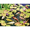 Koi pond iv fine art print by rosiland solomon at for Koi pool thornton