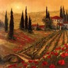 Poppies Of Toscano I