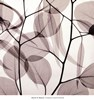 Eucalyptus Leaves [Positive]
