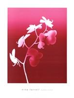 Summer Orchid Fine Art Print