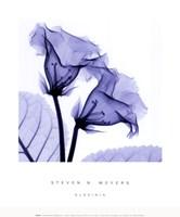 Gloxina Sm Framed Print