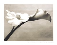 Calla-Anemone Fine Art Print