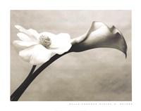 Calla-Anemone Framed Print