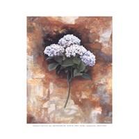 Hydrangea Royal Fine Art Print