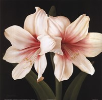 Contemporary Lily I Fine Art Print
