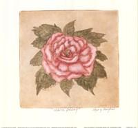 Mauve Peony Fine Art Print