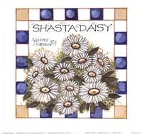 Shasta Daisy Fine Art Print