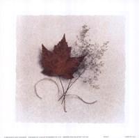 Maple Fine Art Print