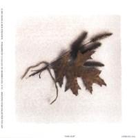 Oak Leaf Fine Art Print