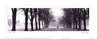 Avenue of Trees Fine Art Print