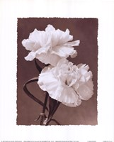 Carnations Framed Print