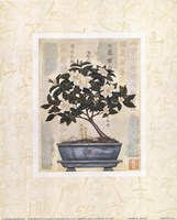 Gardenia Bonsai Framed Print