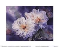 White Peonies Fine Art Print