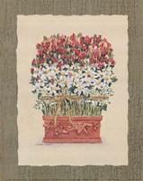 Daisy Topiary Fine Art Print