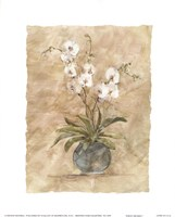 White Orchids I Fine Art Print