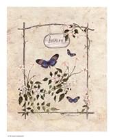 Jasmine Butterfly Fine Art Print