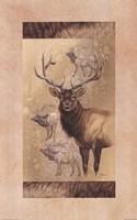 Elk Fine Art Print