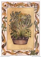 Culinary Herbs Framed Print