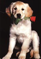 Dog and Rose Fine Art Print