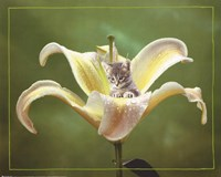 Kitten And Flower Fine Art Print