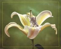 Kitten And Flower Fine Art Print