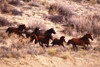 Mustang Horses Running, Wyoming Wall Poster