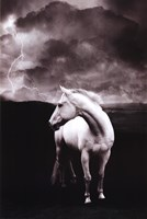 White Horse Wall Poster