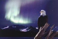 Eagle, Aurora Borealis Framed Print