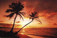 Tropical Sunset Framed Print