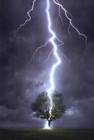 Lightning Striking a Tree Fine Art Print
