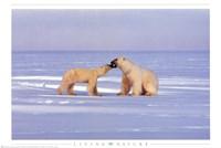 Polar Bear Courting Fine Art Print