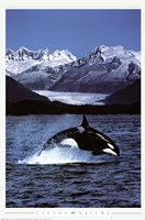 Orca Wall Poster