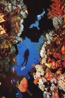 Coral Reef Wall Poster