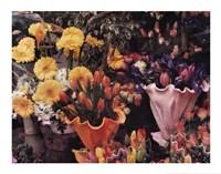 Flowers, Florence Fine Art Print