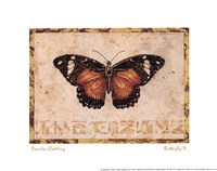 Butterfly IV Framed Print