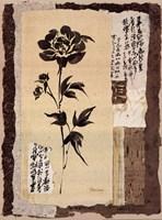 Zen Peonies Framed Print
