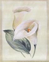 Calla Lily I Fine Art Print