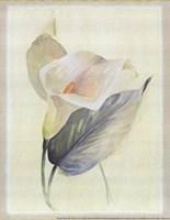 Calla Lily III Fine Art Print