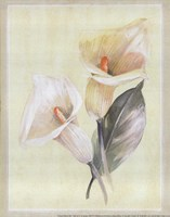 Calla Lily IV Framed Print