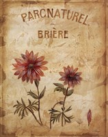 Parcnaturel I Fine Art Print