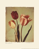 Spring Color II Fine Art Print