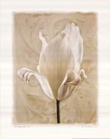 Chiaroscuro I Framed Print