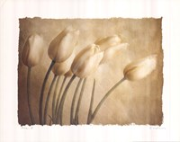 Aria II Fine Art Print