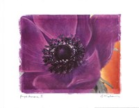Purple Anemones II Framed Print
