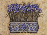 Blue Irises Fine Art Print