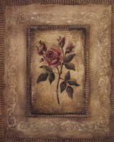 Savin Rose Fine Art Print