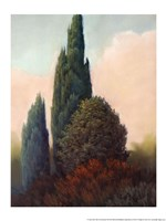 Tuscan Trees I Fine Art Print