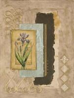 Metallic Iris II Fine Art Print