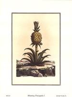 Pineapple I Fine Art Print