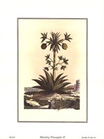 Pineapple II Framed Print